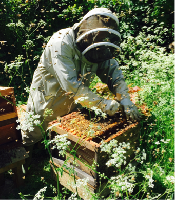 Berkhamsted beekeeper, Berkhamsted bees, Berkhamsted honey, local honey, Hertfordshire honey, Cris Baker, Collette Hayes